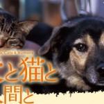 映画「犬と猫と人間と」 殺処分の現実を知る必要がある訳