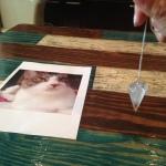 「アニマルコミュニケーション」 数時間の訓練でウチの猫と会話できた!