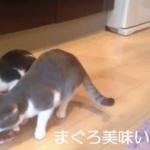 安全なキャットフードって? ウチの猫にはじめて缶詰をあげてみた反応がヤバイ
