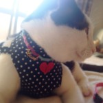 ネコとの防災 地震の備えにハーネス買いました!