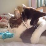 朝ごはんの後、遊びもお昼寝も両方したい欲張りなネコ