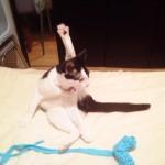 ネコは紐が大好き ネコがハマる簡単手作りオモチャ