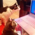 ネコが遊ぶためのネコ専用アプリにハマるネコ