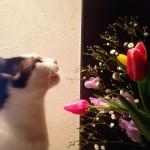 お花や観葉植物は危険 ネコと暮らすために諦めるべきこと