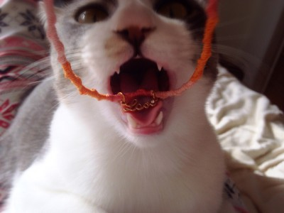 猫の首輪_2