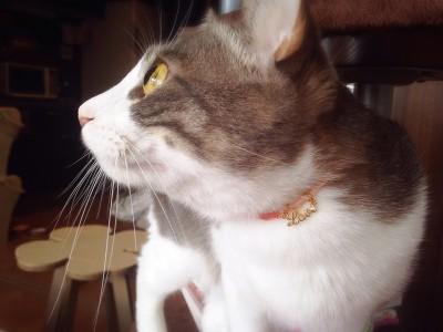 猫の首輪_8