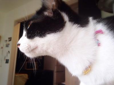 猫の首輪_9
