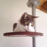 掃除機がとてもキライなネコ なぜか香箱座りで待機