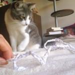 ネコが夢中になって遊ぶ 簡単すぎる手作りオモチャ