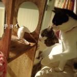 ネコの可愛いすぎる行動 チョイチョイが萌える