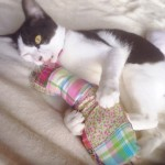 ネコの手作りオモチャ 「 けりぐるみ 」 を作ってみた!