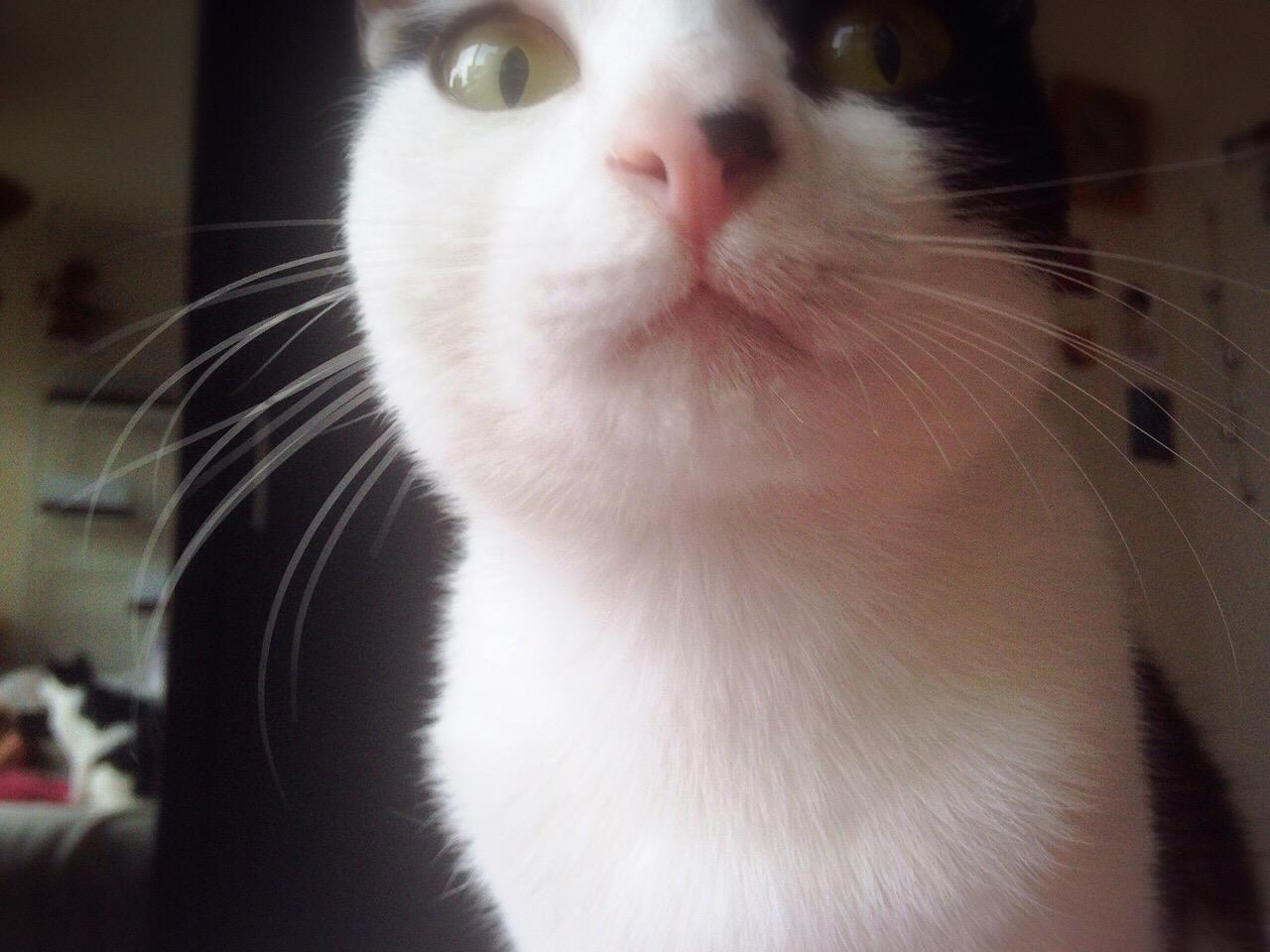 cat_10