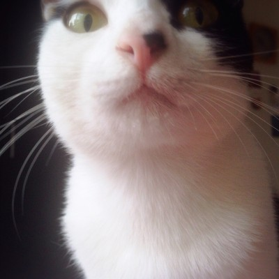 アゴに水滴付けた猫1