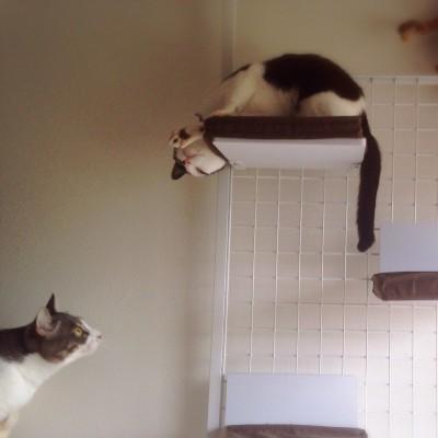 cat_22