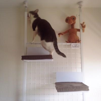 cat_26