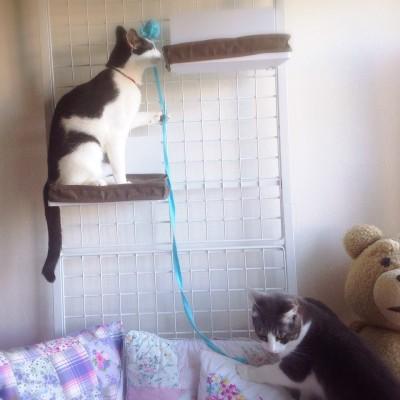 cat_27