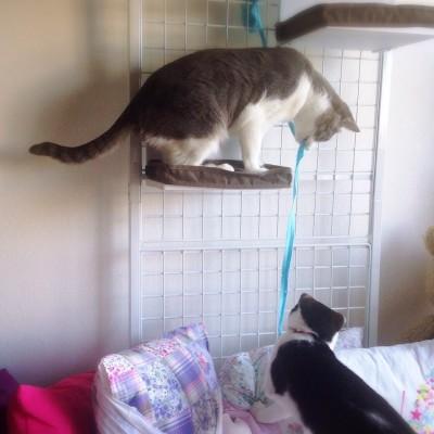 cat_28
