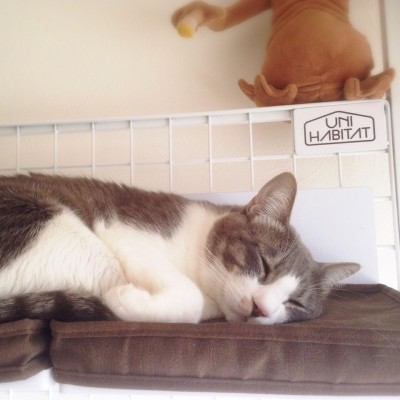 cat_31