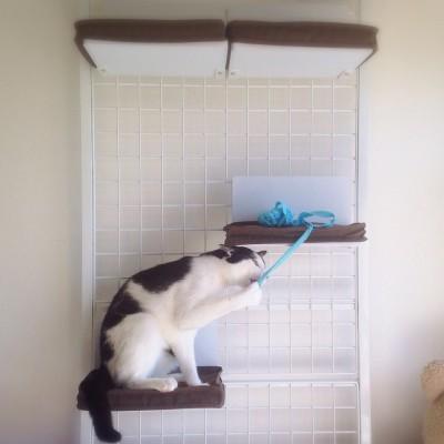 cat_32