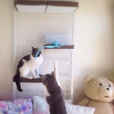 cat_33