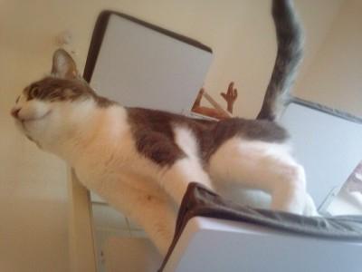 cat_37