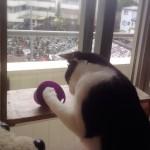 室内飼いのネコにオススメの、刺激いっぱいのご飯タイム!