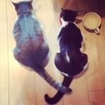 ネコが最高にエキサイティングな時に見せる「お尻ピコピコ」
