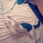 「猫ひっかき病」を正しく知り、ネコともっと仲良くなろう!
