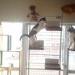網戸をよじ登るネコ対策 ボルダリングできるキャットタワー