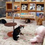 CATS&DOGS CAFÉ