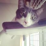 アニマルコミュニケーターさんに、ウチのネコと会話してもらいました!PART2