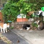 里親募集中の猫@東京・神奈川